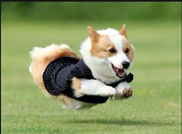 遛狗也是一種運動 ,國際研究說明。 運動好處多