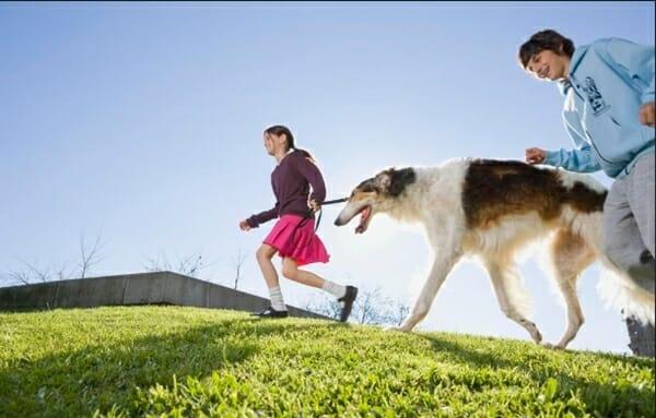 遛狗也是一種運動 ,國際研究說明。 每週運動150分鐘