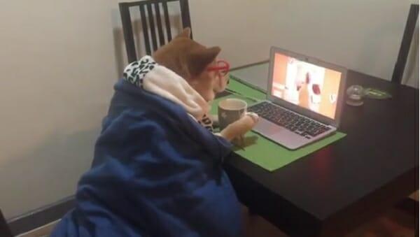 追劇柴柴 升級追劇保姆 怎麼有點像小紅帽的奶奶…