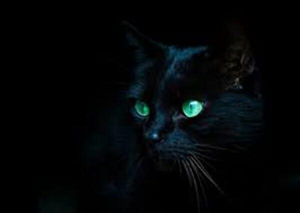 貓的眼睛 為什麼總在夜晚發光 充滿神秘的雙眼