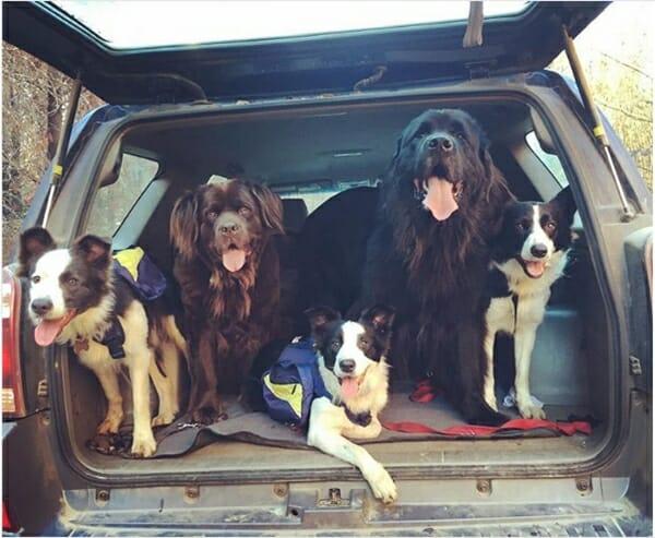 牧羊犬 智利森林的救星 開心大合照