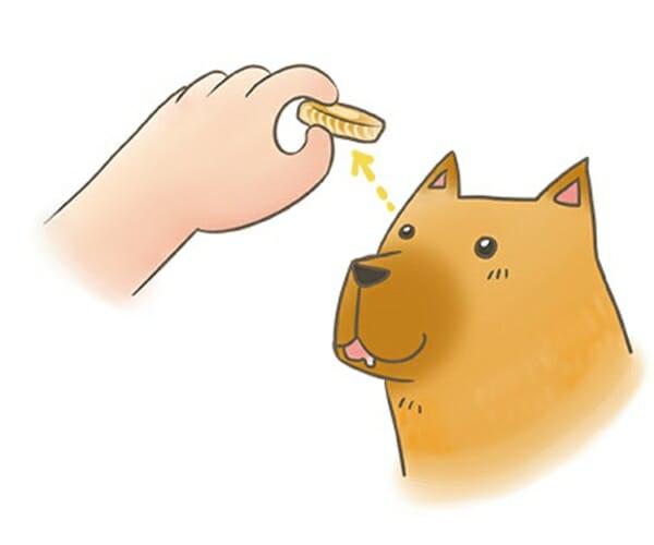 犬貓學校 是在教些什麼呢? 可訓練狗的專注力