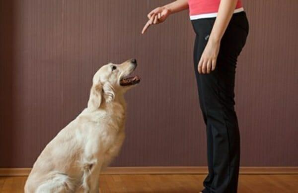 犬貓學校 是在教些什麼呢? 訓練可以讓牠們變的穩重