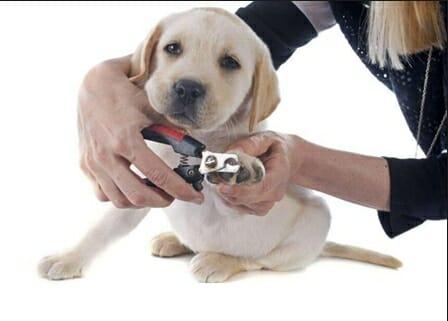 狗狗 的指甲該怎麼剪? 鏟屎官大人要注意的細節
