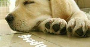 狗狗 的指甲該怎麼剪? 狗狗剪指甲要從小養成