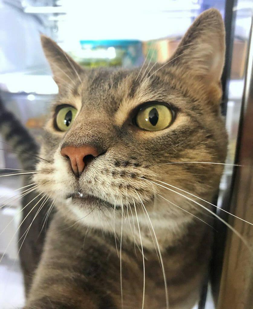 貓咪自拍 一試成網紅 被自己帥醒