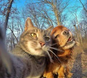 貓咪自拍 一試成網紅 妹紙合照