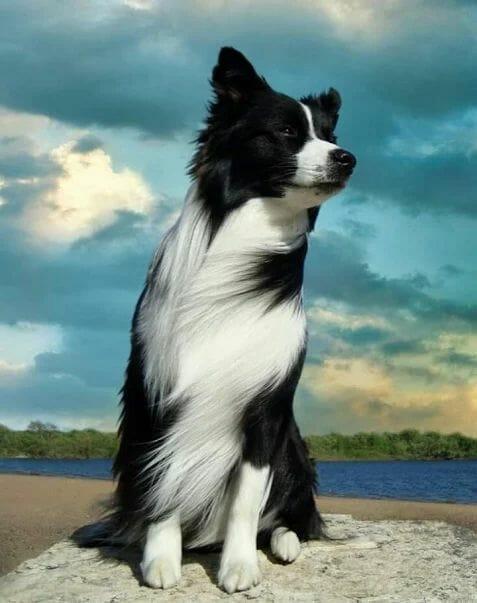 適合跑步的狗 全馬超馬沒在怕 邊境