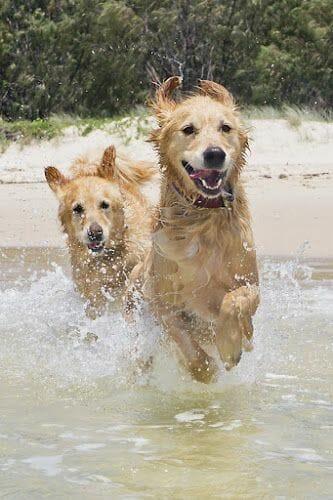 照顧狗狗 訓練教育的九大迷思 原來老狗還是擁有學習的能力 玩水