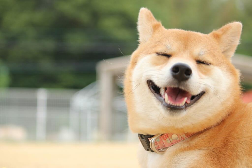 照顧狗狗 訓練教育的九大迷思 原來老狗還是擁有學習的能力 笑