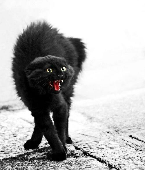 貓咪打架 鏟屎官如何巧妙化解 憤怒