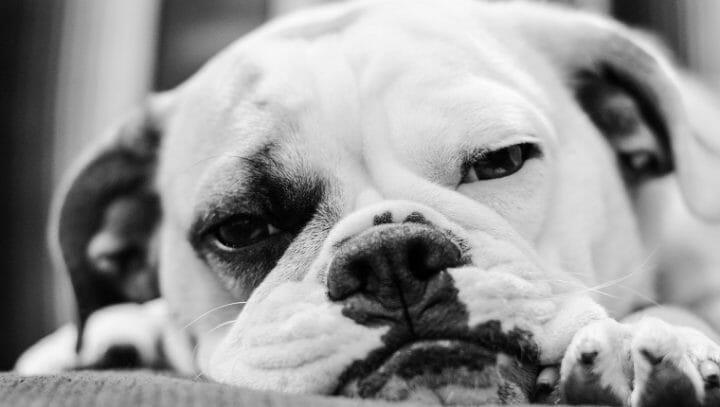 照顧狗狗 訓練教育的九大迷思 原來老狗還是擁有學習的能力 色盲