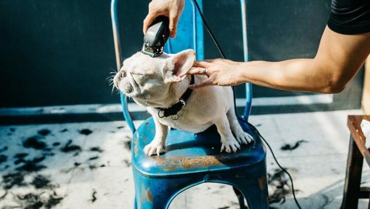 照顧狗狗 訓練教育的九大迷思 原來老狗還是擁有學習的能力 剃毛