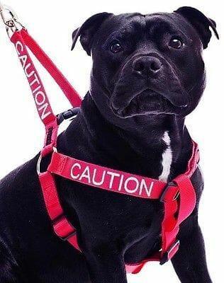 狗狗怕生 鏟屎官的應對之道 空間