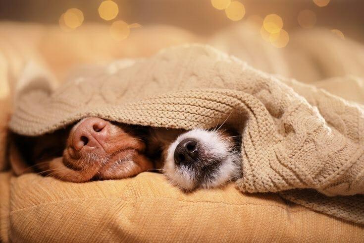 狗狗的陪伴 多一個很可以 花不多