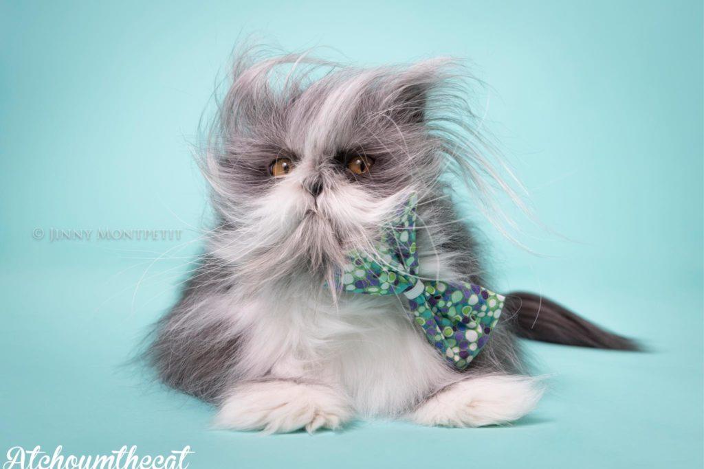 貓狗不分 寵物明星Atchoum的魅力 多毛