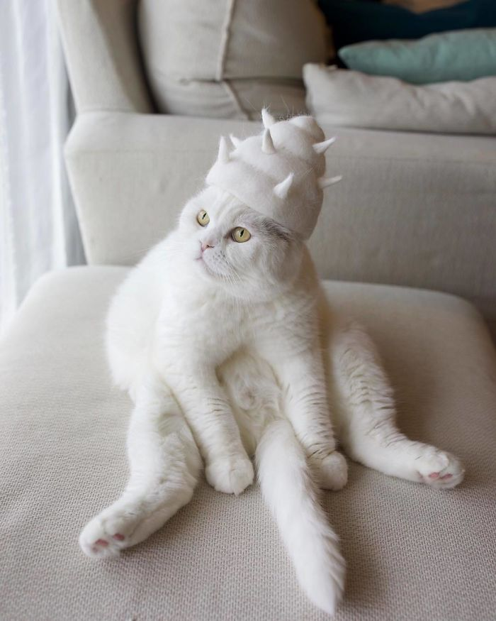 貓咪掉毛 自產自製創意配件 貝殼