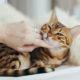 貓咪行為 貓咪信任你的幾大表現 鏟屎官中了幾個呢?