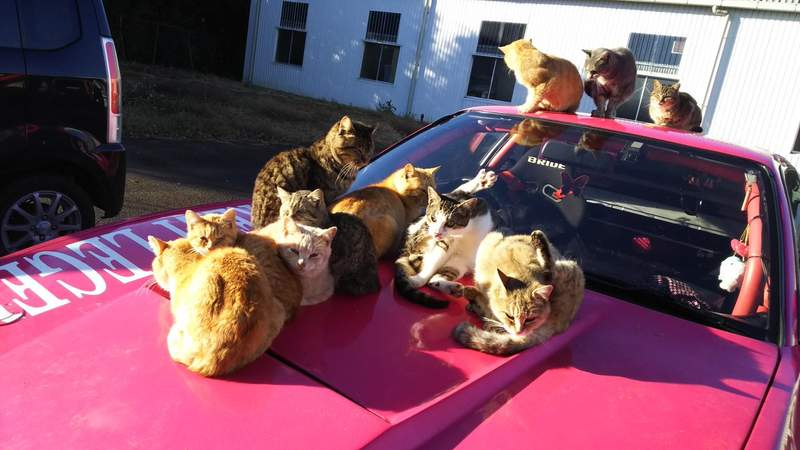貓咪拍拍引擎蓋 運動升級版!!